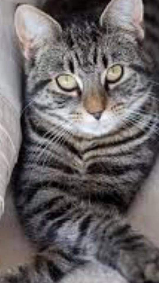 2018 February | Lost and Found Pets of McLean County Illinois